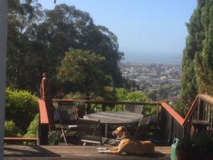 photo of brown dog lying on a wooden deck next to table and chairs, looking out over eucalyptus grove