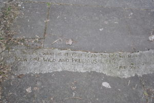 "words drawn into concrete: ""what is it you plan to do with your one wild and precious life? - M. Oliver"""