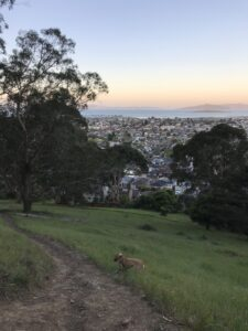 photo looking down a grassy hill, across a cityscape and out to a bay